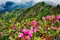 Scenes along   appalachian trail in great smoky mountains Royalty Free Stock Photo