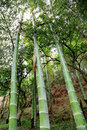 The scenes of bamboo forest national park in conghua city guangdong china Stock Photography