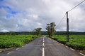 Scenic clean quiet tranquil road in rural or outskirt area with tea plantation on both sides and blue sky this picture is taken Stock Image