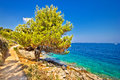 Scenic coast of Dugi otok island Royalty Free Stock Photo