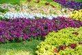 Scenic Colourful Flowerbeds and a Winding Grass Lawn Pathway in an Attractive English Formal Garden Royalty Free Stock Photo