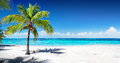 Scenic Coral Beach Royalty Free Stock Photo