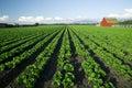 Scenic Farming Stock Image