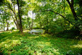 Scenic Forest Of Fresh Green D...