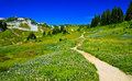 Scenic hiking trail on Mount Rainier Stock Photo