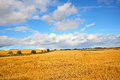 Scenic landscape with fields of wheat Royalty Free Stock Photo