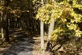 Scenic close up view of a trail leading into a wooded nature park on a sunny day Royalty Free Stock Photo