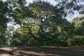 Scenic Lowcountry Charleston Angel Oak Tree