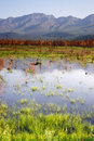 Scenic marsh water panoramic mountain landscape outback alaska a tarn or lake just off highway reflects the Royalty Free Stock Images