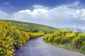 Scenic road amidst the vibrant bushes Stock Photography