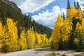 Scenic Road in Colorado Fall Aspens Stock Photos