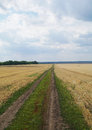 Scenic rural road and fields in summer landscape Royalty Free Stock Photo