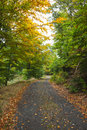 Scenic shot of narrow road along lush forest trees in the Royalty Free Stock Images