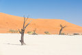 The scenic Sossusvlei and Deadvlei, clay and salt pan with braided Acacia trees surrounded by majestic sand dunes. Namib Naukluft Royalty Free Stock Photo