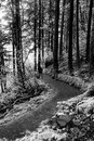 Scenic Trail in Columbia River Gorge, Oregon Royalty Free Stock Photo
