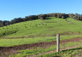 Scenic view of Collie River valley rural paddocks Western Australia. Royalty Free Stock Photo
