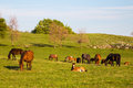 Scenic view of horses out to pasture on sunny day Royalty Free Stock Photo