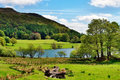 Scenic view of loughrigg tarn tranquil trees by the shore on a summer day in the english lake district Royalty Free Stock Image