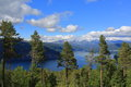 Scenic View Of Pine Trees, Fjord And Mountains In Norway Royalty Free Stock Photo