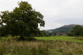 Scenic view of Tree and House in Ambleside countryside, Cumbria Royalty Free Stock Photo