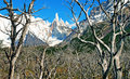 Scenic wilderness landscape with Cerro Torre Royalty Free Stock Image