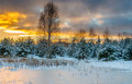 Scenic winter landscape Royalty Free Stock Photo