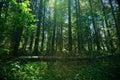 Schaduwrijk bos Stock Fotografie