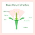 Scheme of basic flower structure. Learning biology