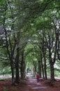 Schlendern auf tree-lined Pfad Lizenzfreies Stockbild
