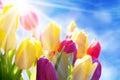 Schließen sie oben von sunny tulip flower meadow blue sky und von bokeh effekt Lizenzfreie Stockfotografie