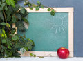 School board, red apple, green leaves. Beginning of the school year. September 1, study, training, school Royalty Free Stock Photo