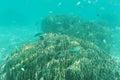 School of fish swimming near reef. Underwater shot. Marine life Royalty Free Stock Photo