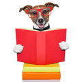 School learing dog reading a big red book Stock Photo