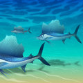 School of sailfish floating above seabed Stock Photo