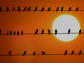 School of Sunset Birds Royalty Free Stock Photography