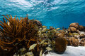 School of tropical fish on coral reef swim in and out barrier in belize Stock Photos