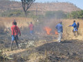 Schoolboys  fighting   bush-fire with tree branches. Royalty Free Stock Photo