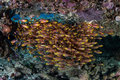 Schooling Fish In Reef Crevice
