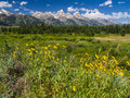 Schwabacher Landing With Yellow Flowers