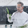 Scientist analyzing leafs close up of in a chemistry lab around lab tools and with a blackboard with formulas on the background Royalty Free Stock Photo