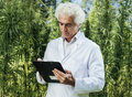 Scientist checking hemp plants in the field he is writing down notes on a clipboard herbal alternative medicine concept Royalty Free Stock Photography