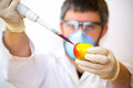Scientist creating GMO apples Royalty Free Stock Photo