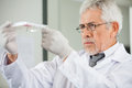Scientist examining microplate in laboratory confident mature male Royalty Free Stock Photo