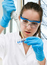 Scientist loads pcr samples Royalty Free Stock Images