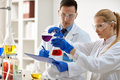 Scientists doing medical research Royalty Free Stock Photo