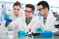 Scientists experimentation in research laboratory Royalty Free Stock Photography