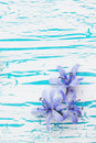 Scilla on the board flower spring blue snowdrop Stock Images