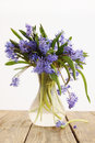Scilla in vase flower spring blue snowdrop Stock Images