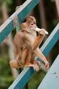 Scimmia di scoiattolo comune Manaus Brasile Fotografie Stock Libere da Diritti