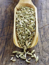 Scoopful of fennel seeds Stock Images